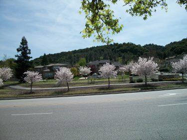 Across Blossom Hill