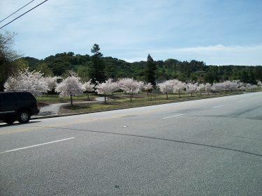 Across Blossom Hill Road 2