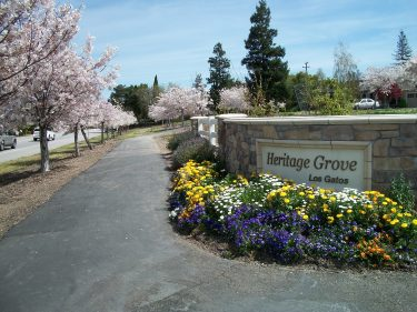Blossoms at Heritage Grove