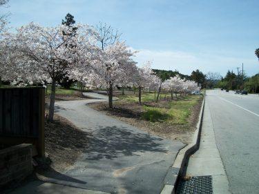 Path thru blossoms