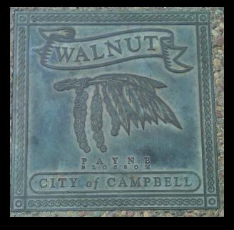 Fruit - Campbell - walnut