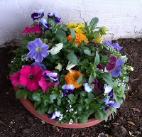 color-pots