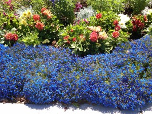 Color in landscaping