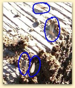 dampwood termites at Belgatos Park April 30 2011