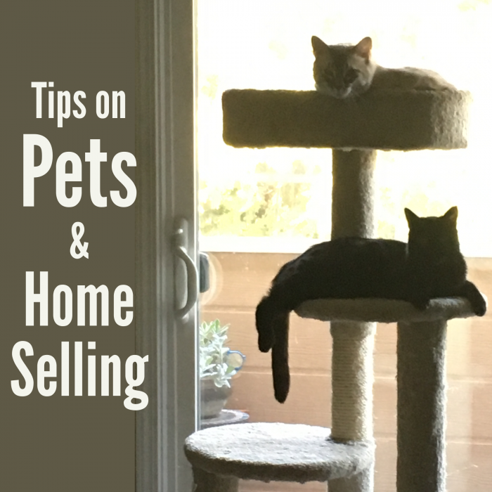 Tips on Pets and Home Selling