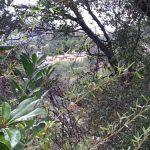Hakone plants