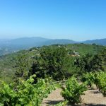 Ridge Vineyards June 21 2015 (1)