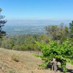 Ridge Vineyards June 21 2015 (2)