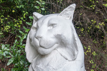 Leo or Leona - the mascot of Los Gatos