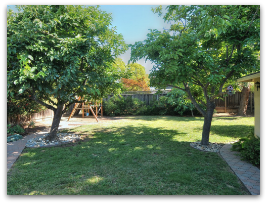Gorgeous and expansive back yard at 920 Hazelwood Ave, Campbell, CA 95008