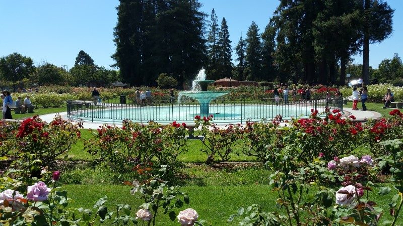 The beautiful water fountain is the centerpiece of the San Jose Municipal Rose Garden
