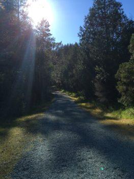 Walk through the redwoods at Quarry Park in Saratoga