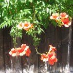Alta Vista Garden Flowers