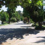 Alta Vista Street Tree Lined