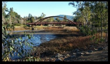 El Sombroso peaking over a bridge at Vasona County Park in Los Gatos