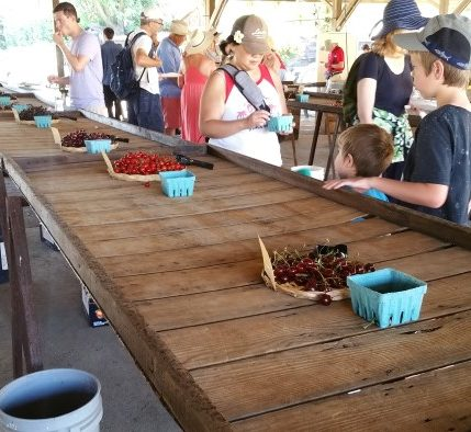 fruit tasting stations with cherries apricots plums and more