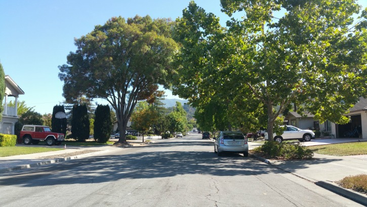 Del Oro neighborhood tree lined street