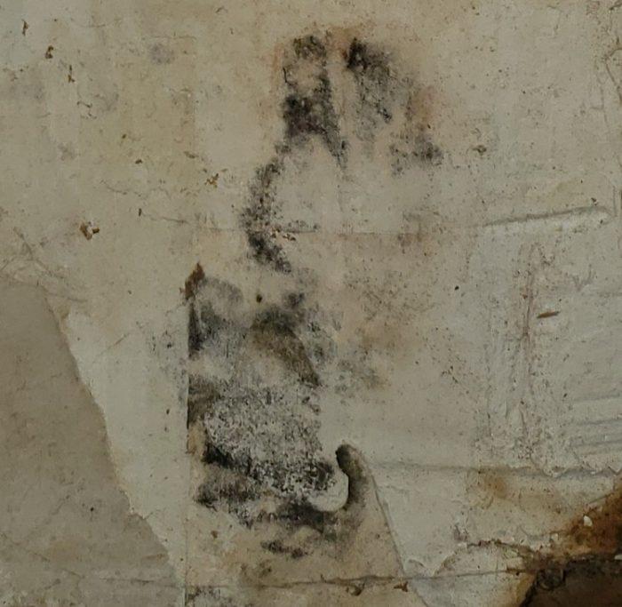 Mold sample on garage wall